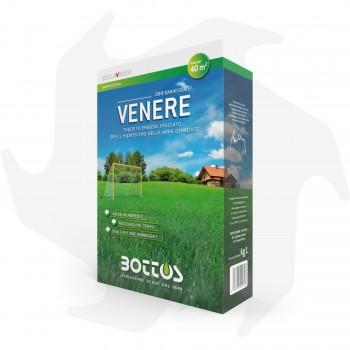 Venere Bottos - 1Kg Sementi...