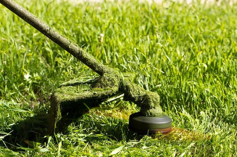 Come cambiare il filo del decespugliatore, lo strumento ottimale per prendersi cura del giardino