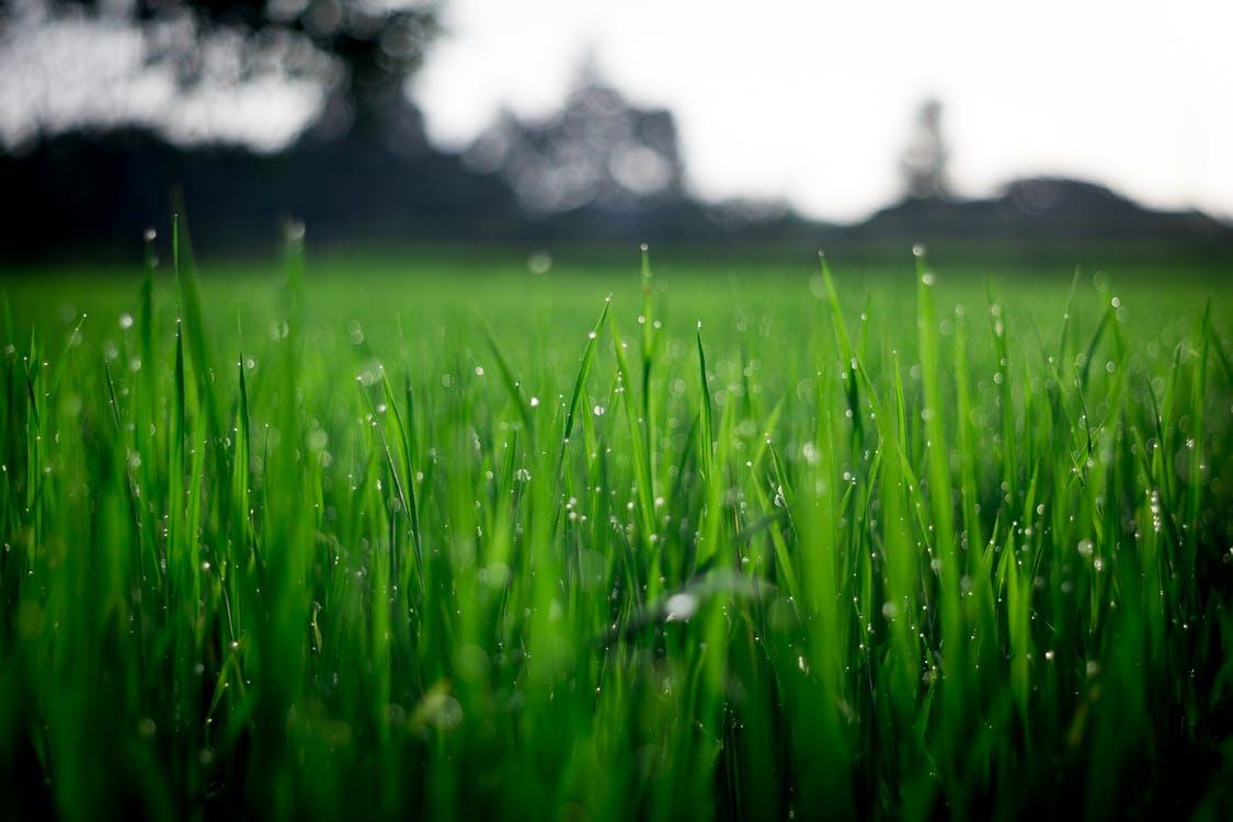 I liquidi biostimolanti sono una valida soluzione se ti chiedi come concimare il prato per ottenere erba verde e rigogliosa