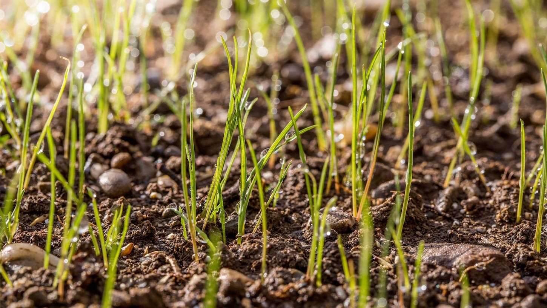 Come preparare il terreno per la semina del prato